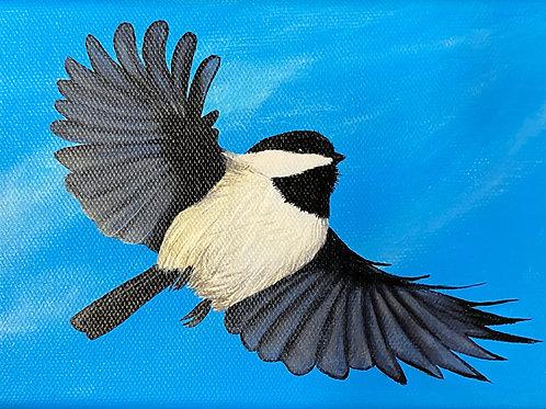 Chickadee - 3