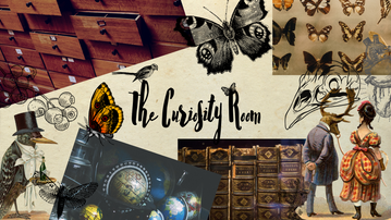 The Curiosity Room Mood Board