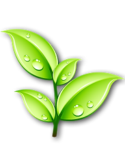 Green Leaf Logo.png