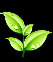 Green Leaf Logo.png
