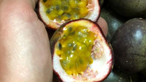 5-6Lb California Passion Fruit