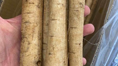 5-6Lb Burdock Root