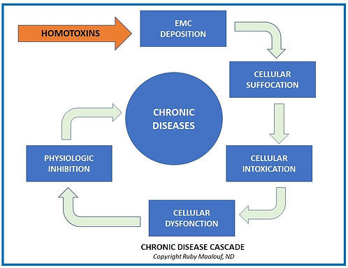 Homotoxicology chronic disease cascade