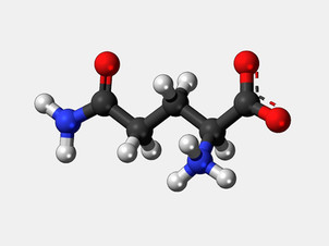 La Glutamine: Applications Thérapeutiques