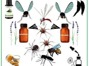 Les huiles essentielles contre les piqûres d'insectes