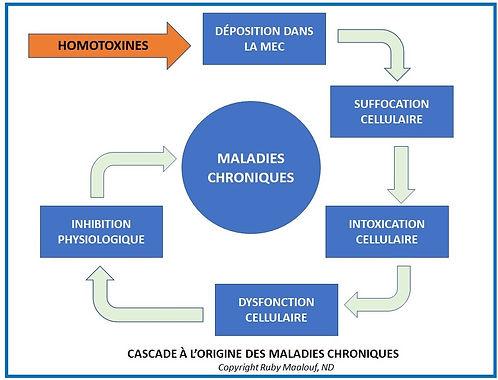 Homotoxicologie cascade des maladies chroniques
