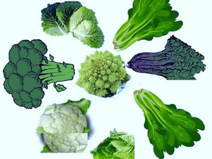 Is Vitamin K2 Effective For The Prevention & Treatment of Osteoporosis?