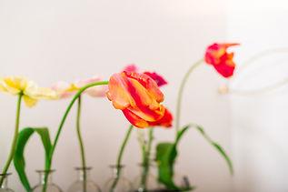 Blume_einzeln komprimiert.jpg