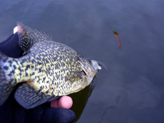 Ice Out Crappies.