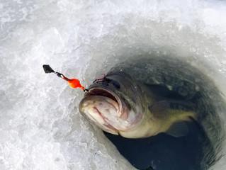 Black Hills Area Fishing Report