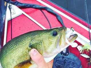 Pre-Summer Bass Tactics