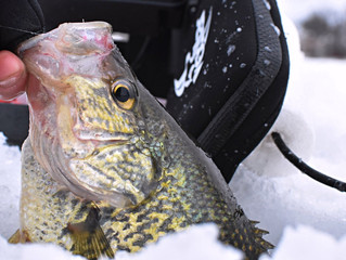 Alexandria Area Report: Mid-Winter Panfish