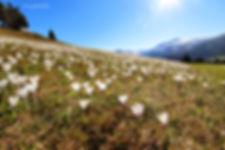 Krokusse - Frühling im Kleinwalsertal
