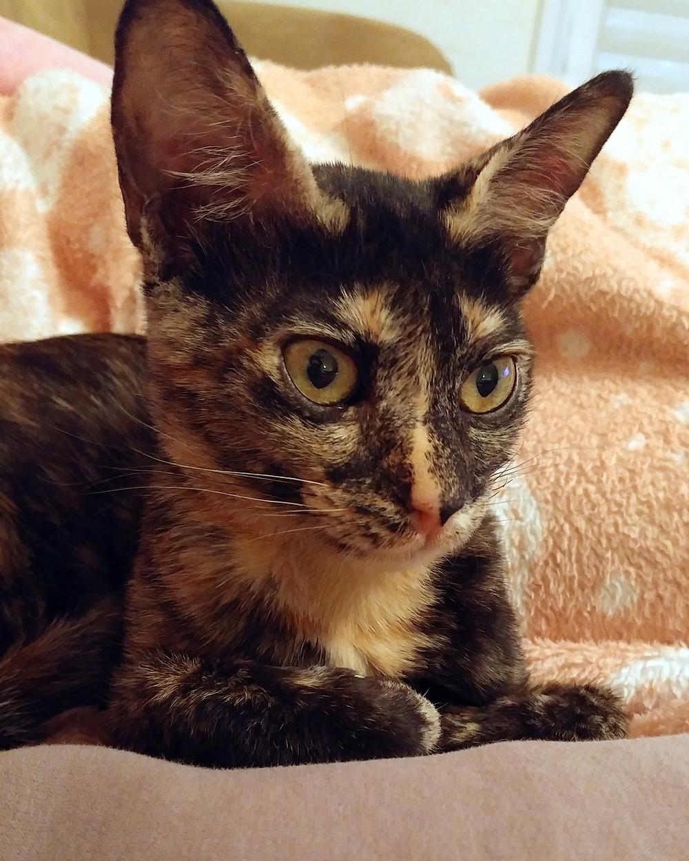 קרן לביא-אברהם   החתולה בובית