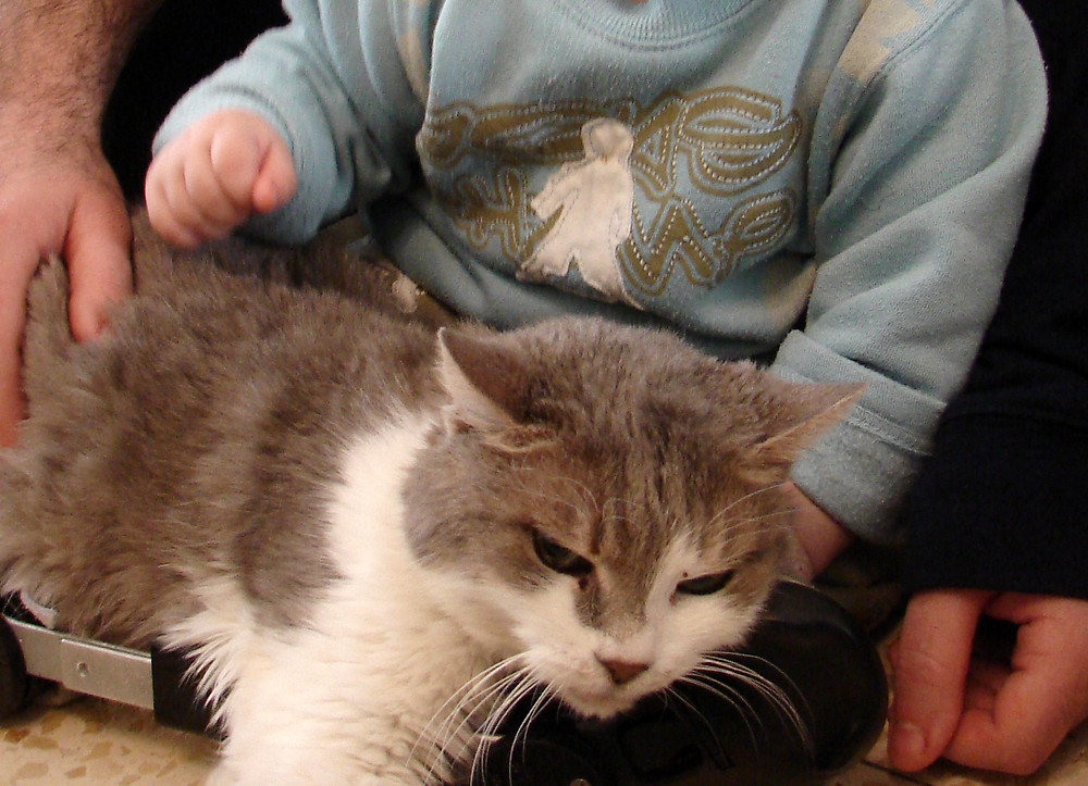 קרן לביא-אברהם   החתולה שוקולית