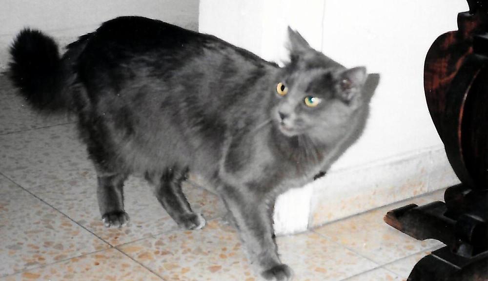 קרן לביא-אברהם   החתולה אלכס