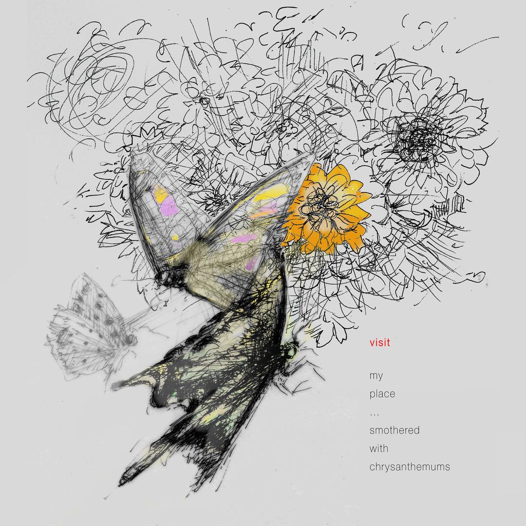 butterflies and chrysanthemums