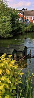 Ducks and geese regularly nest in our pond
