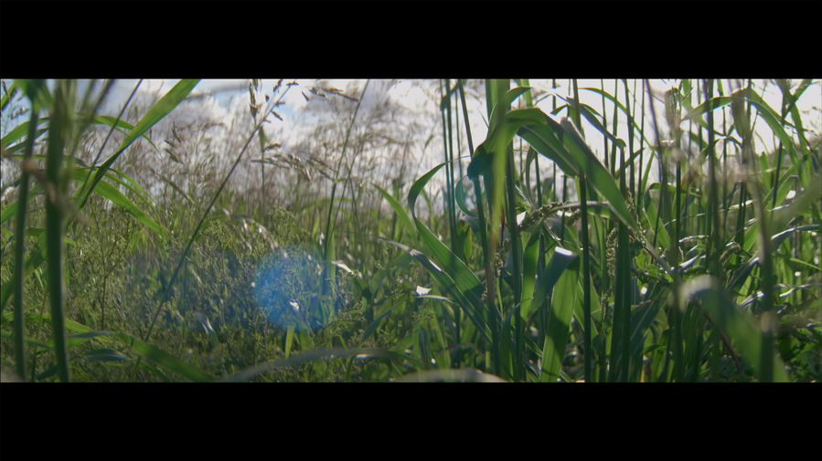 Screen Shot 2021-10-05 at 4.04.41 PM.png