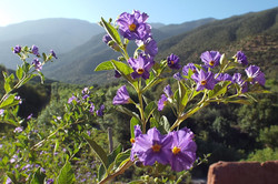 Kasbah Africa Flora & Fauna (14)