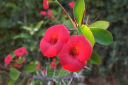 Kasbah Africa Flora & Fauna (12)