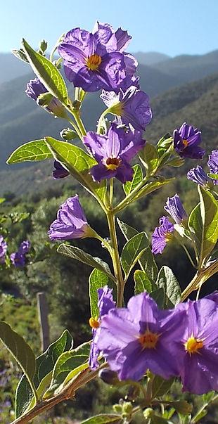 Kasbah Africa Flora & Fauna (14).JPG