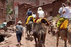 Atlas Camel Trek (9)