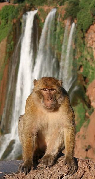 Apes & Waterfalls (1).JPG