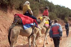 Atlas Camel Trek (11)