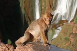 Apes & Waterfalls (10)