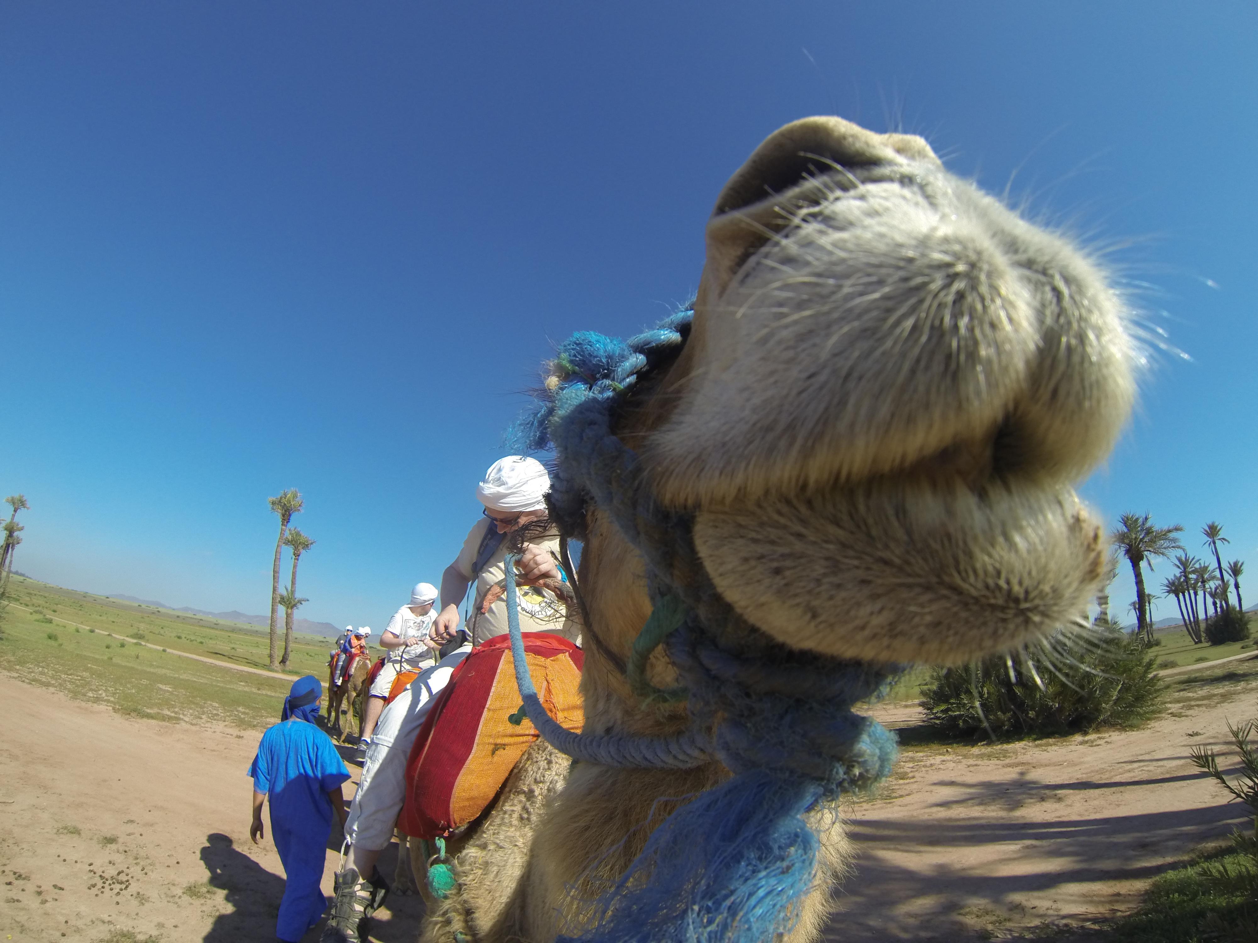 Southwood Camels (6)