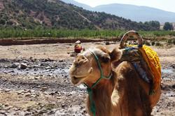 Atlas Camel Trek (5)