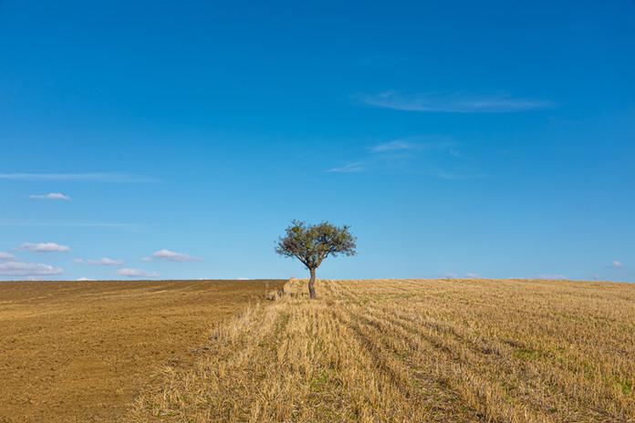 Landscape Photography - Malek Nass-001.j