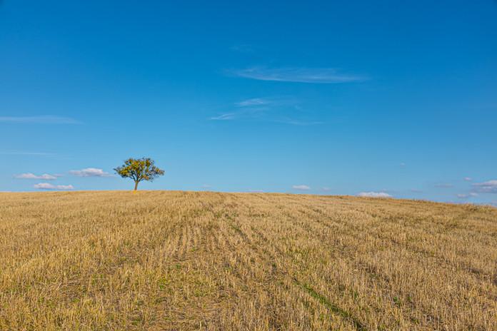 Landscape Photography - Malek Nass-002.j