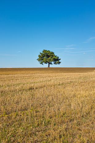 Landscape Photography - Malek Nass-003.j