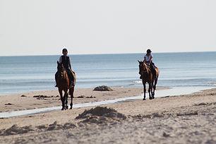 horses-325219.jpg