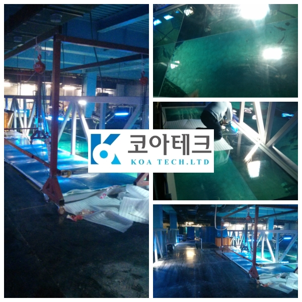 Busan sea life aquarium shark tank