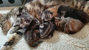 Falone et ses bébés