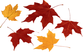 autumn_leaves_PNG3586.png
