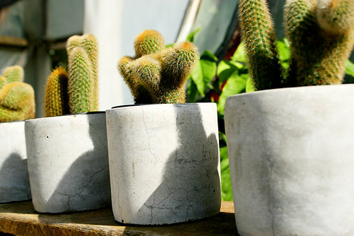 Single Concrete Creations