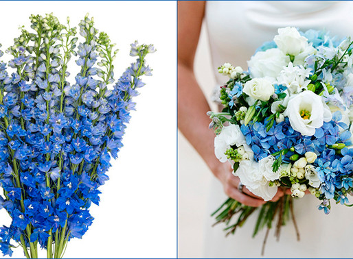 FEELING BLUE? THERE'S A FLOWER FOR THAT.