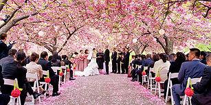 BBG_cherry_blossoms_ceremony.jpg
