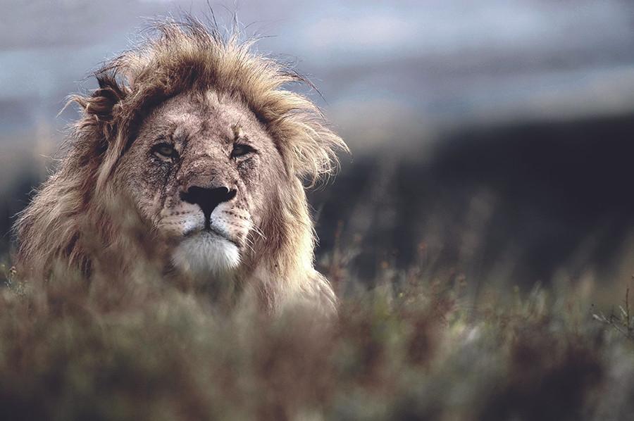 Photo Courtesy of Shamwari Private Game Reserve
