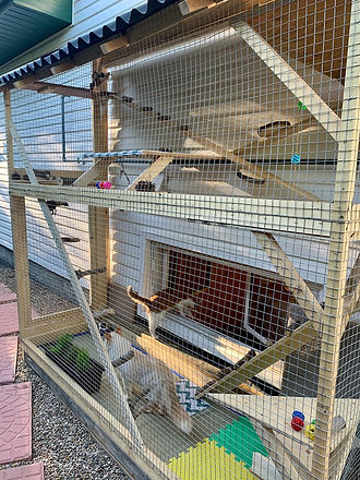 snakes-on-a-plain-catio-2.jpg