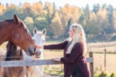 Siggesta häst.jpg