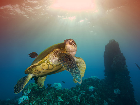 Marine Protected Areas: Sink or Swim