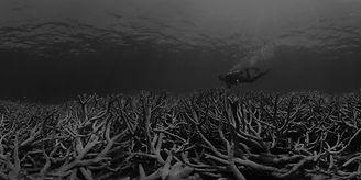 coral-bleaching-at-heron-island_gbr_2016