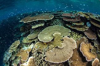 CoralReefImageBank_MattCurnock_Australia