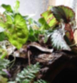 plants'_edited.jpg