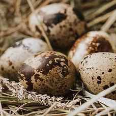 quail_edited.jpg